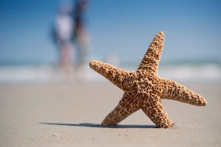 The sharpness and fine detail found in the starfish demonstrate the level of quality this lens possesses. Also notice the natural bokeh in the background.